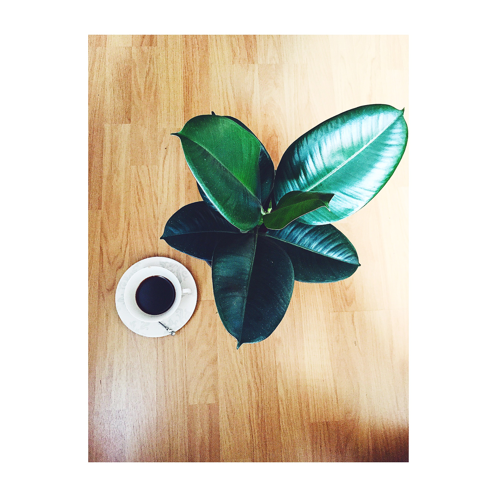 Plant and coffee